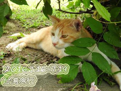 ●今度は母娘で台湾旅!~①出発の1日目&猫村行っていっぱい食べての2日目●