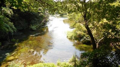 水の生まれる町、三島、柿田川を歩く