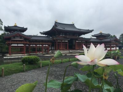 京都 / 宇治 平等院のあのミュージアムを見たくて