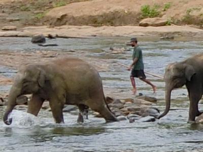 母娘旅・スリランカ 2~象の孤児院で、象、象、象(ピンナワラ)