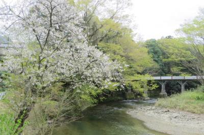 袋田探鳥会に参加して [2015](1)