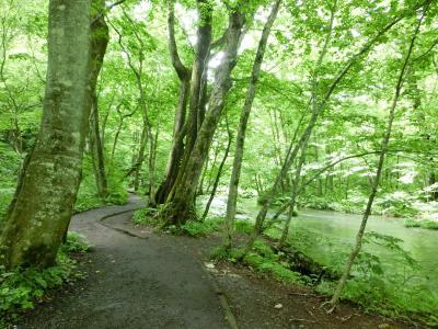初めての東北は夏の青森 「奥入瀬渓流」を見たかったの!(その2)奥入瀬 石ヶ戸~屏風岩