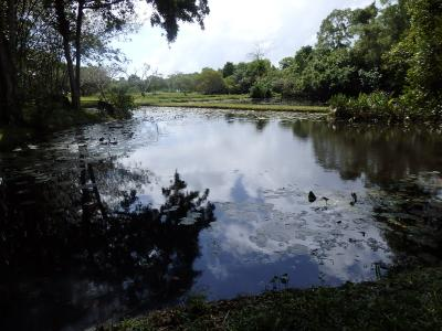 スリランカへ2 バワのホテルとルヌガンガ