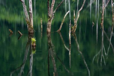旅行部夏合宿in長野 ☆「自然湖」「御射鹿池」「下栗の里」「千畳敷カール」を行く☆☆彡