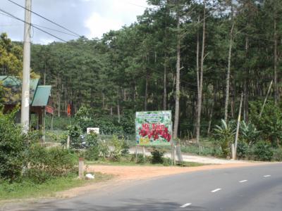 バイクで駆け抜けた、花の高原ダラット。3日目。 フラワーパークとイチゴ狩り。ベトナム人奥さん初めてイチゴが生ってるのを見る。