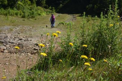 志賀湿原の池巡りウォーク、もう秋の気配!