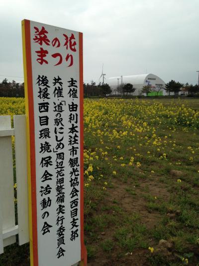にしめの「菜の花まつり」