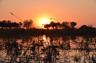 ボツワナ チョベとオカバンゴ湿地帯とサブティのサファリ 2