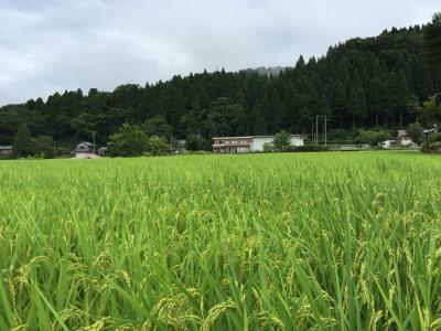 福井県池田町へお墓参り