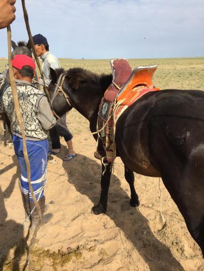★南ゴビの大草原で馬を走らせる