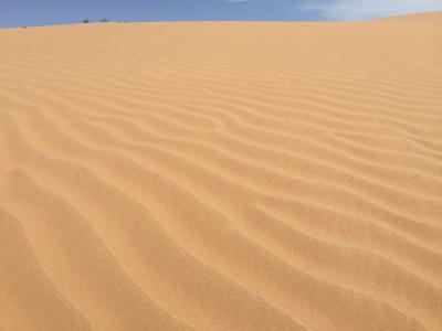 ★ゴビ砂漠らしいモルツォグ砂丘