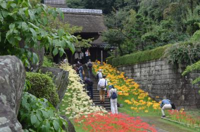 横浜のヒガンバナ 西方寺、三ッ池公園