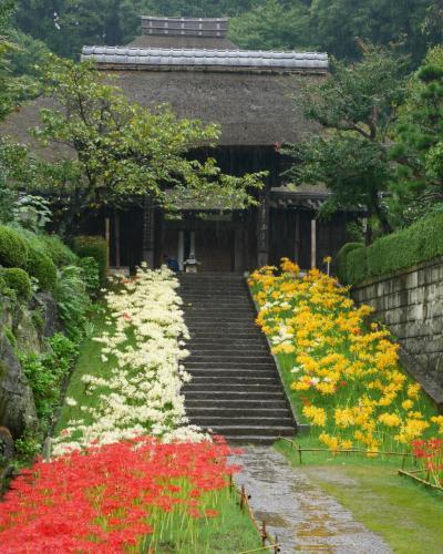 赤白黄、三色の彼岸花@どしゃ降りの西方寺