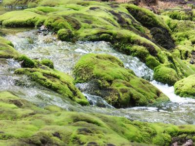 深い緑に染まる苔の世界へ
