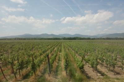 仏西英トライアングルの旅(8) アルザスワインの里