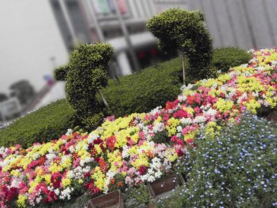 品川区のお花可愛いスポット 色々 (^ω^ )〜★