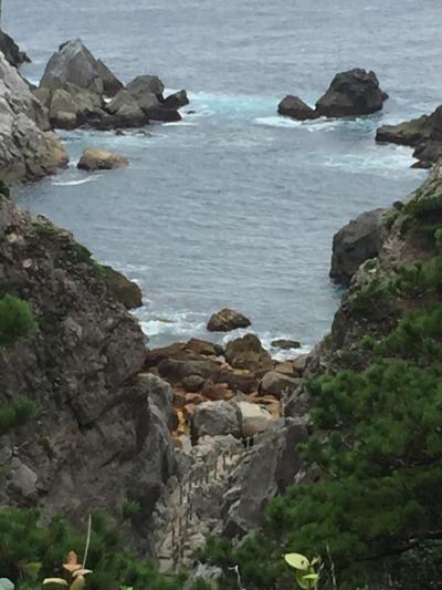 式根島 サバイバル キャンプ 其の四