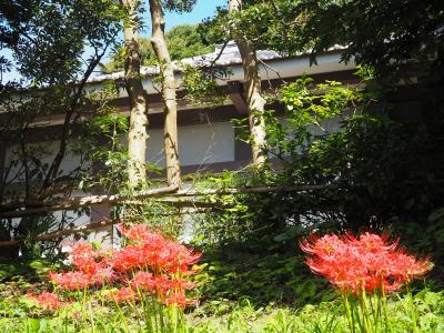 東へ其の八、運慶仏の浄楽寺それから横須賀の軍港へ