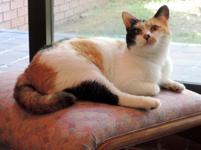 看板猫・温泉・美味しいものに癒される山梨旅