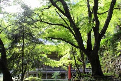 京都西山の秘境・金蔵寺へ初秋の青紅葉ドライブ+ウニールでスペシャルティコーヒー