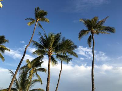 3泊5日 ハワイ旅行 1・2日目の旅行記