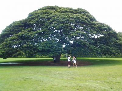 三回目のハワイ旅行。60歳+58歳夫婦 旅行記 2