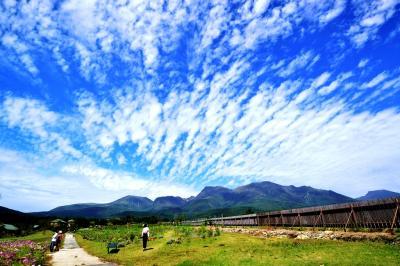 くじゅう花公園② コスモスと雲と