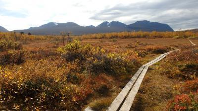 王様の散歩道で紅葉・黄葉を楽しむ(アビスコ国立公園)
