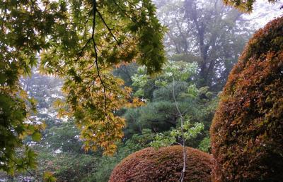 箱根の紅葉はまだまだ先(10月17日)
