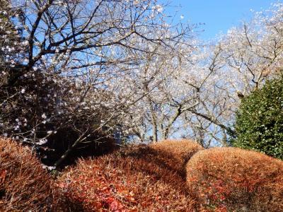 桜山登山と観桜