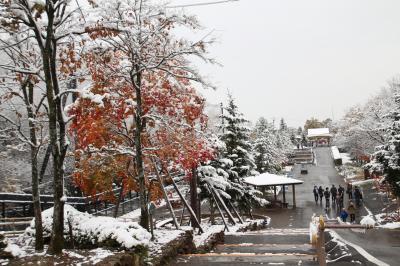 夢叶った北海道レッサーパンダ遠征(旭山動物園)(2)初雪の翌日に訪れた雪と紅葉の旭山動物園