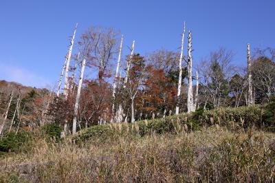 旅するイルカ♪ 紅葉狩り 奈良県へ