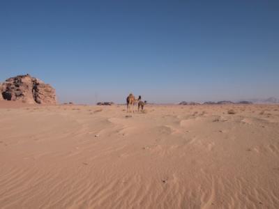 2012中東旅行(ワディラム)