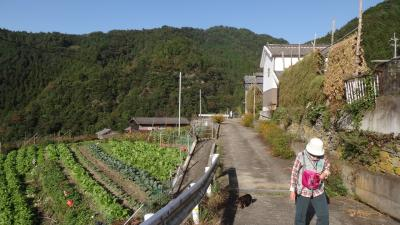 徳島県つるぎ町 端山巡礼のお堂と蕎麦の収穫風景