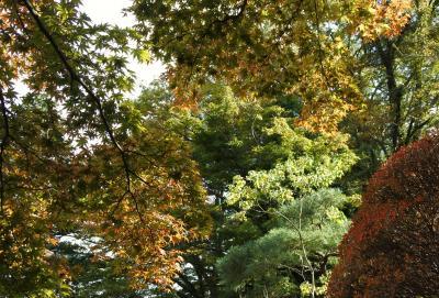 菊華荘の紅葉はまだまだ先(10月31日)