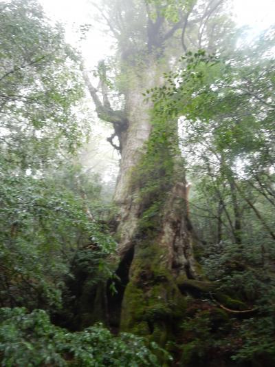 縄文杉までのトレッキング