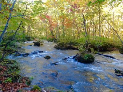 青森紅葉の旅  奥入瀬渓流