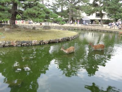 帰省の合間に…ぶらり奈良観光