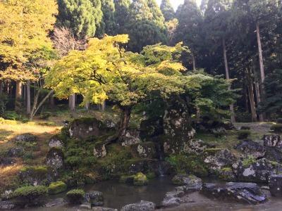 【名庭をたずねて】白い犬とはまったくカンケイない一乗谷朝倉氏遺跡の庭園跡めぐり