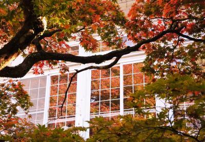 西洋館の紅葉はまだまだ先(11月5日)