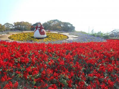 秋バラ咲いてるかな?西山公園