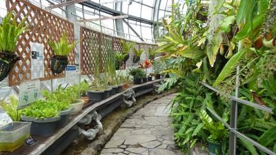 気儘な一人旅(83) 姫路市 手柄山中央公園の温室植物園。