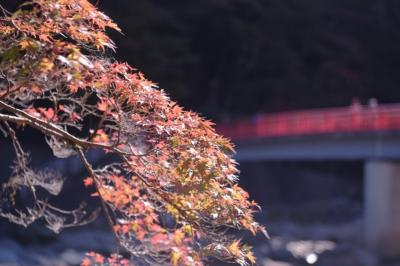 刀削麺食べたくて一人で香嵐渓。分かっちゃいたけど紅葉には早過ぎた。