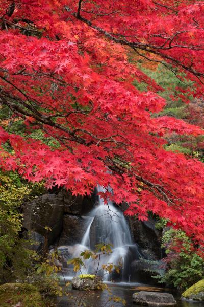 秋色鮮烈! 古峰園の紅葉
