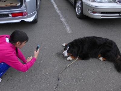 バーニーと行く九州 トラックで行く大型犬との旅・鹿児島往復 後編