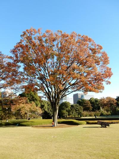 「木枯らし1号吹く! 皇居東御苑~日比谷公園 さんぽ」 2016