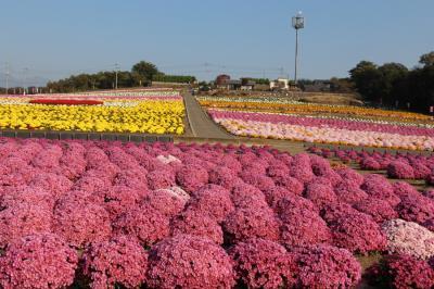 あかぼり小菊の里と榛名公園