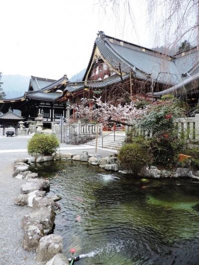 身延_Minobu しだれ桜!には少し早かった…古湯と古刹を抱く、水と緑が豊かな町