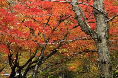 秋色満喫ドライブ~袋田の滝・花園渓谷~