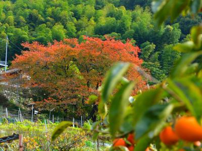 発酵した葡萄の香りにつつまれる 晩秋の大阪ワイナリー